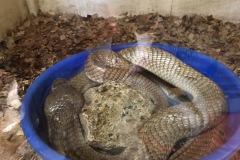 hadí farma