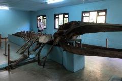 muzeum v Gede